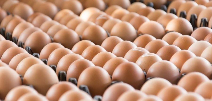 Cómo congelar huevos frescos