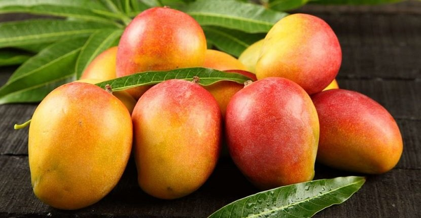 Cómo cultivar mango a partir de su semillaCómo cultivar mango a partir de su semilla