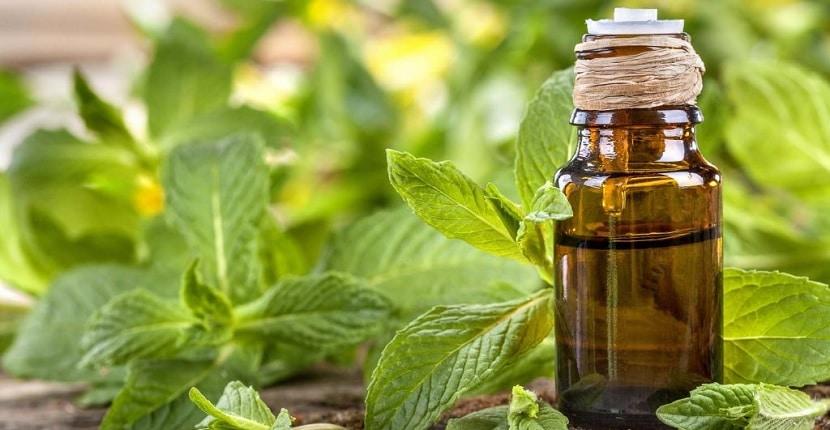 Cómo preparar aceite de orégano