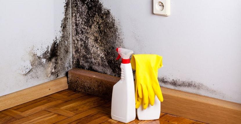 Cómo eliminar el moho de las paredes