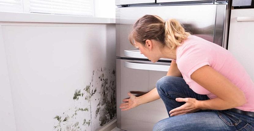 Cómo evitar la aparición de moho en las paredes