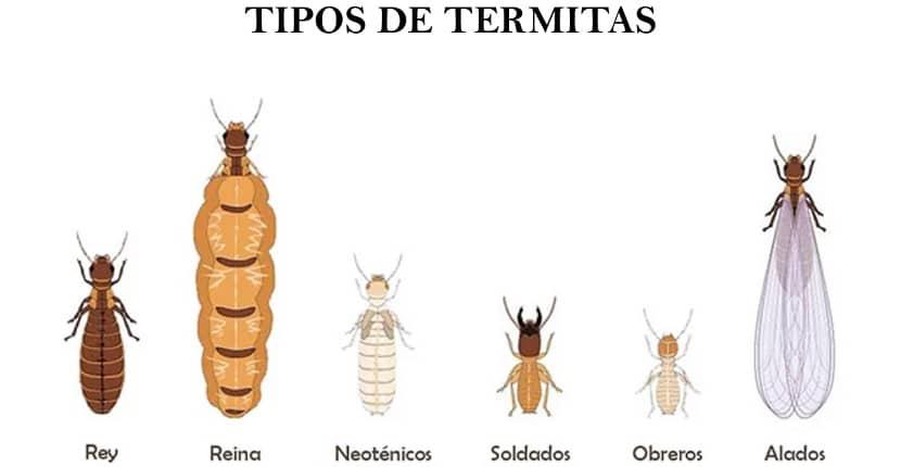 Tipos de termitas